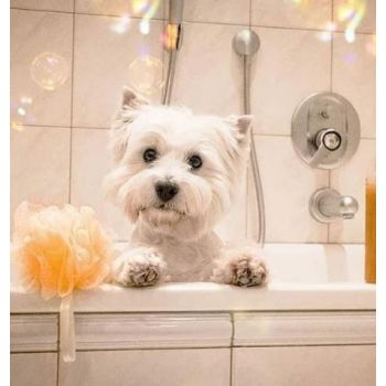 Dog Shower Small size  1 To 10kg