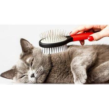 Cat Fullgrooming