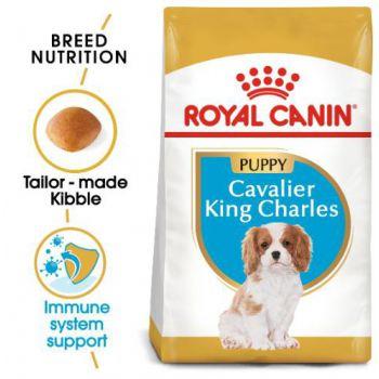 Royal Canin Dog Dry Food Cavalier King Charles JUNIOR 1.5 KG