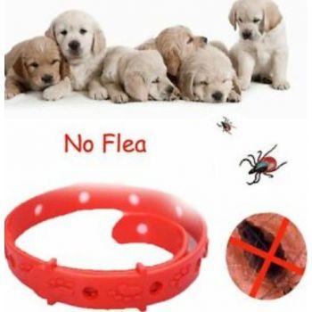 Dog Flea & Tick Bath Small Size 1 T0 10kg