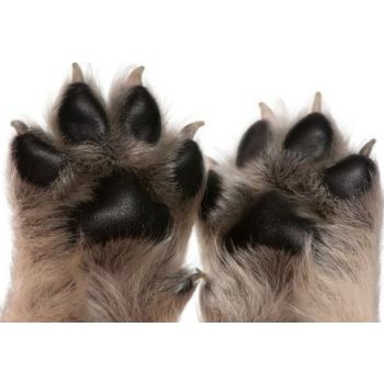Dog Trimming Paws