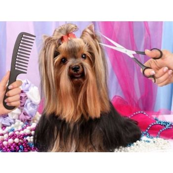 Dog fullgrooming Small Size 1 To 10kg